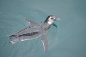 Ilha Grande is the only place where you can see penguins (cold Atlantic) together with Tropic Sea Life