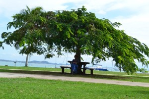 The Mom sitting under a gorgeous tree at the local Yacht Club. These trees look like the Acacia trees one finds in Africa, but there are NO thorns anywhere.