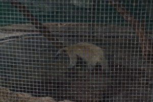 I am sorry that this photo of the anteater is so dark. We could see it much better.