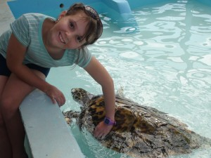 Sophia 'tickling' the turtle on the sensitive line on ther shell