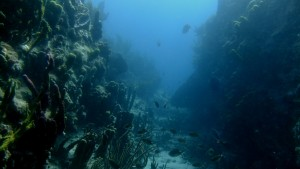 The fish life astounded us - made me realise again the privilege of being able to dive.