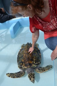 """Mom and the """"pet"""" turtle"""